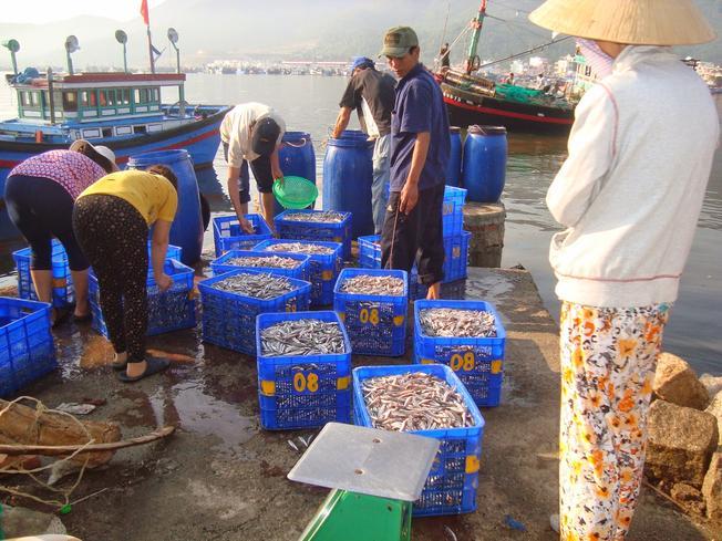 Chợ cá cơm diễn ra vào buổi sáng