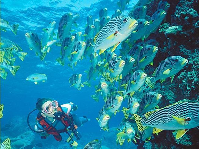 Những trải nghiệm đáng nhớ trong lòng đại dương