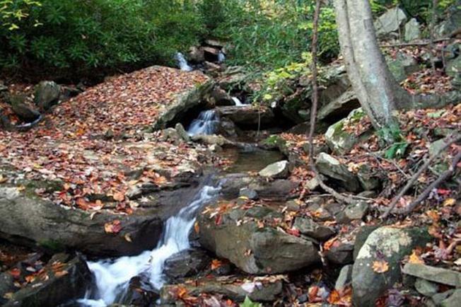 Con đường khám phá đầy đá và cây rừng