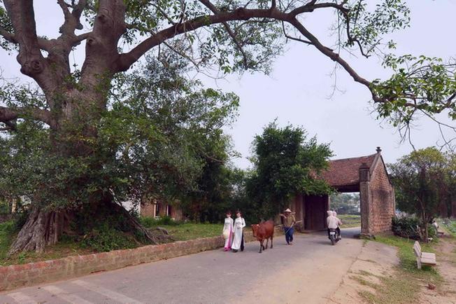 Con đường làng