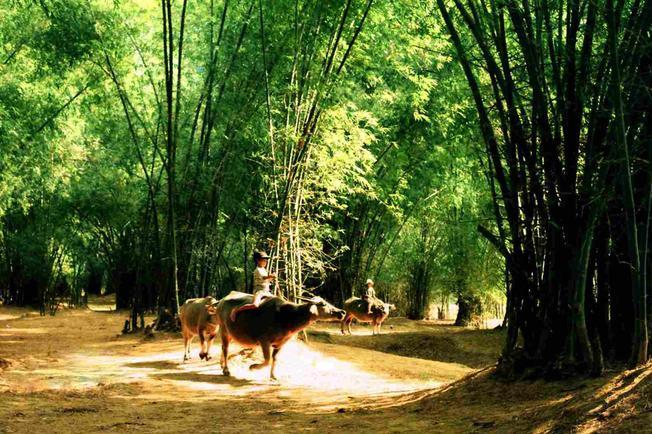 Luỹ tre làng