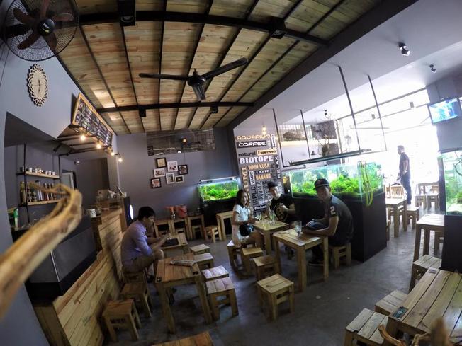 Aquarium cafe thủy sinh ấn tượng với các du khách