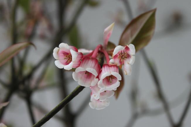 Sớm ban mai ngắm hoa