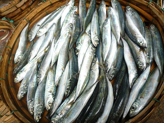 Những con cá nục nhỏ giúp món cá nục hấp bánh tráng thêm hấp dẫn