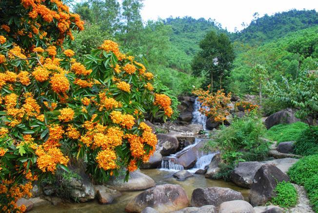 Ngắm hoa rừng khoe sắc ven bờ suối là trải nghiệm khiến nhiều du khách thích thú