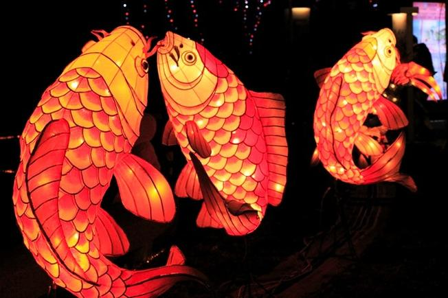 Những chiếc đèn lồng cá chép truyền thống của Nhật Bản