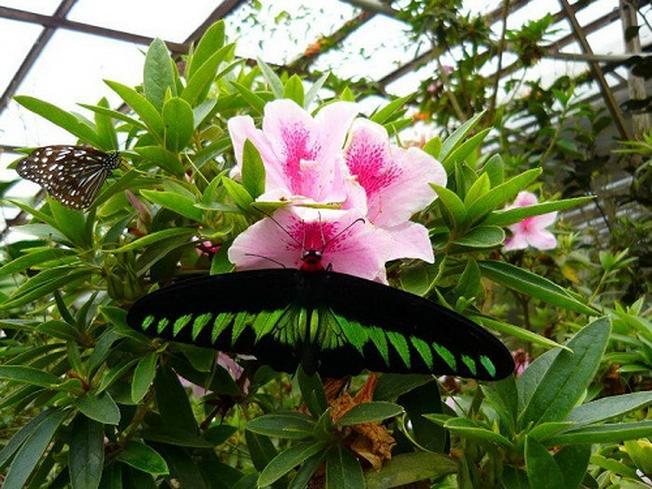 Hàng ngàn loại bướm xinh đẹp xuất hiện trong khu vườn