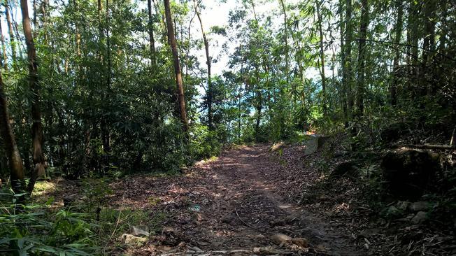 Những con đường rừng dốc đứng khó khăn dẫn đến chùa Hang Mai
