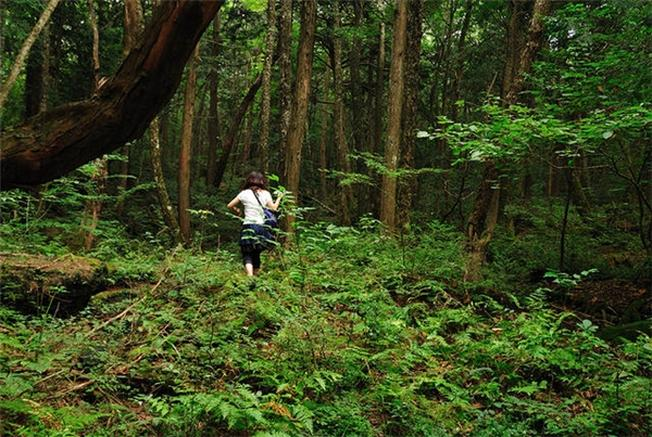 Khi đi vào khu rừng này