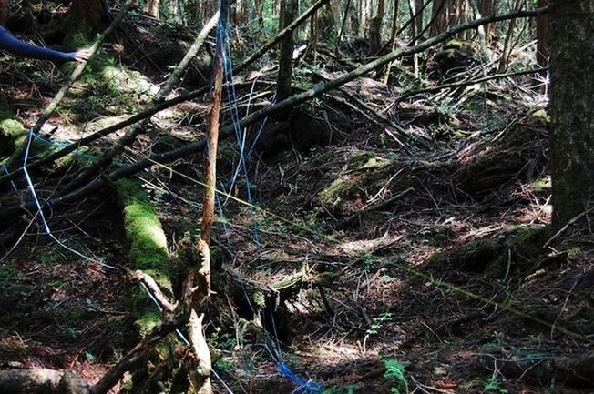 Băng dính quấn quanh cành cây dọc đường để tránh bị lạc