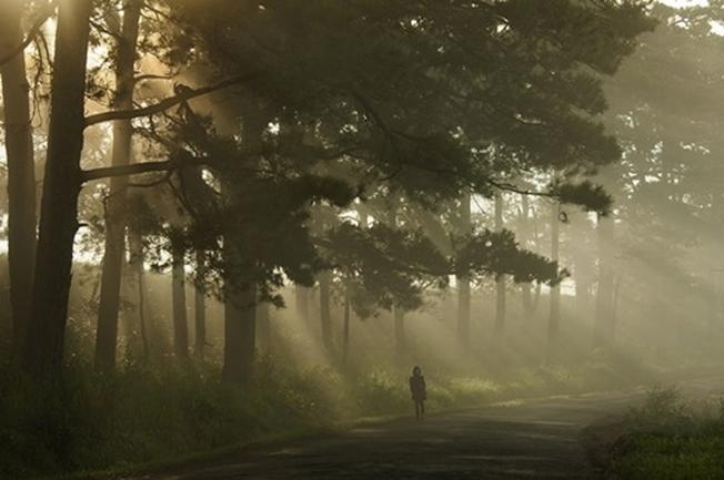 Khung cảnh đẹp đến ngỡ ngàng như bước ra từ phim ảnh