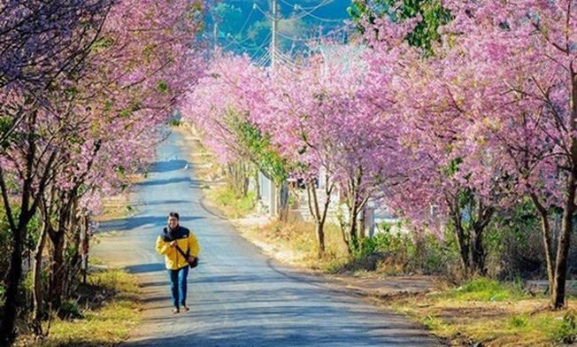 Lạc giữa sắc hồng của thung lũng hoa đào