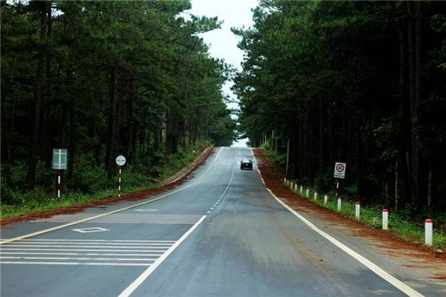 Những tán rừng thông phủ kín hai bên đường