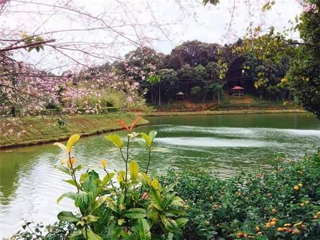 Sắc phớt hồng quyến rũ của nhánh đào rừng bên bờ hồ