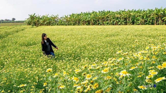 Khung cảnh tuyệt đẹp này không quá xa trung tâm, trở thành điểm đến thú vị cho nhiều bạn trẻ. Có khá nhiều khu ruộng hoa đang vào dịp bung nở và còn đẹp đến trước tết Âm lịch 2016