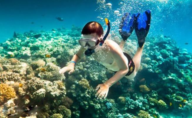 Lặn biển ngắm san hô hoạt động giải trí thú vị
