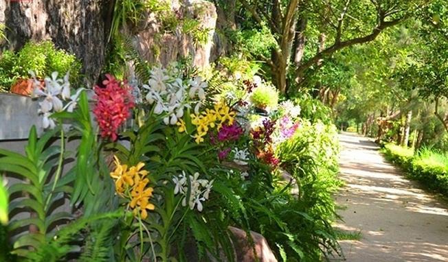 Hoa lan khoe sắc