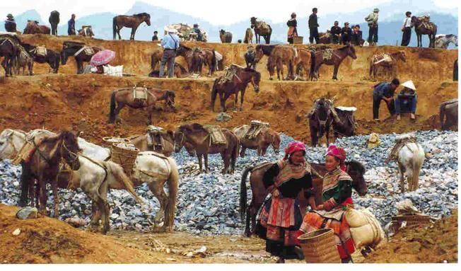 Khu mua bán ngựa điểm đến Sa Pa độc đáo tại chợ phiên Bắc Hà