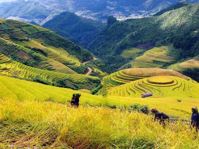 Ngắm sắc vàng trải dài khắp thung lũng Mường Hoa