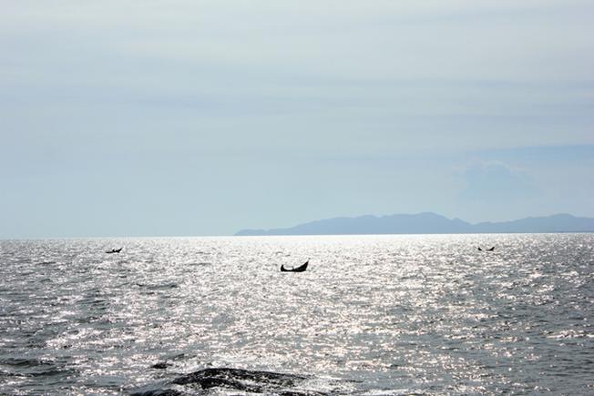 Ngắm biển Hồ Tràm lung linh trong nắng