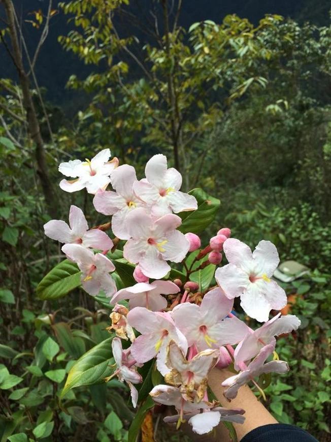 bạn có thể sẽ được chiêm ngưỡng những đồi hoa muống