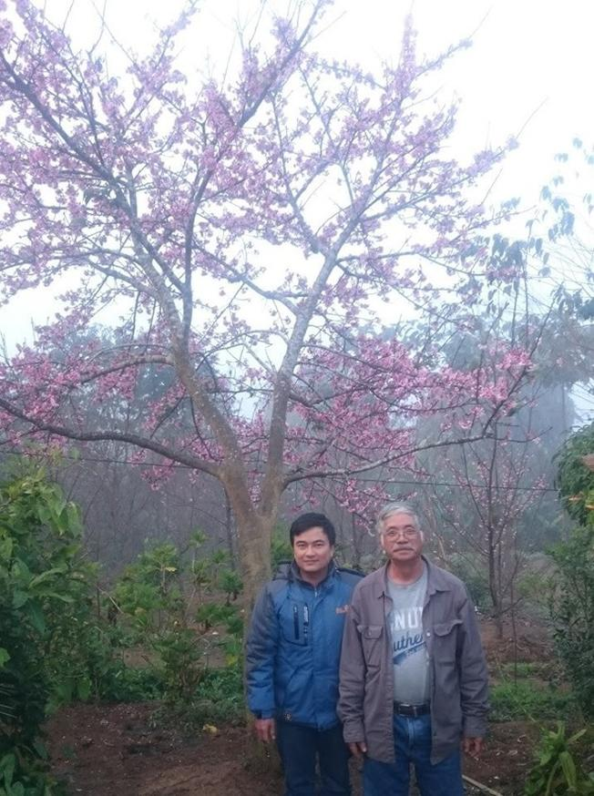 du khách trước một cây anh đào Nhật Bản