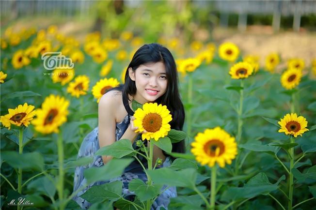 Sắc vàng của hoa hướng dương