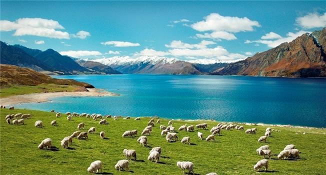 Thiên nhiên New Zealand