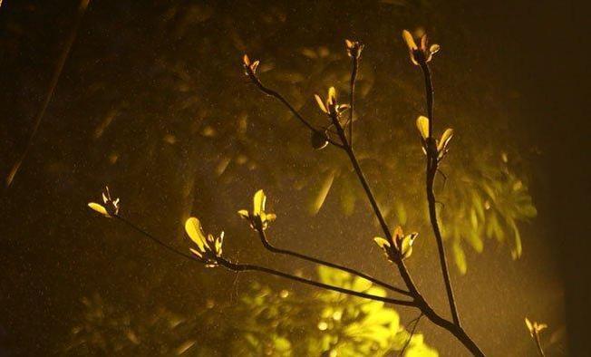 Hạt nước nhỏ li ti chỉ nhìn thấy được dưới ánh đèn