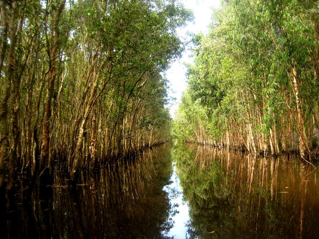 Rừng nước mênh mang