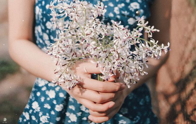 Vẻ đẹp của hoa xoan