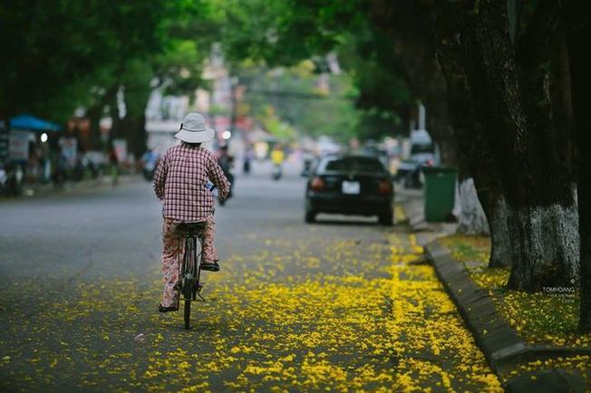 Hoa phượng vàng khiến cho Huế