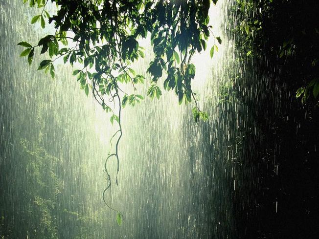 Bức màn mưa