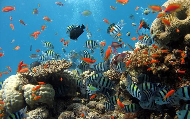 Lặn ngắm san hô, cá biển