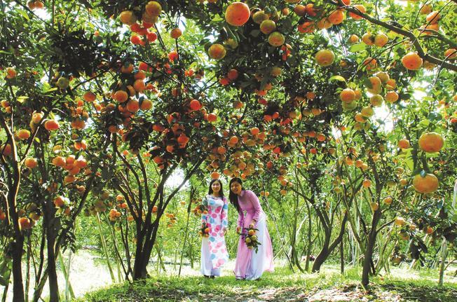 Vườn cây trái Nam Bộ