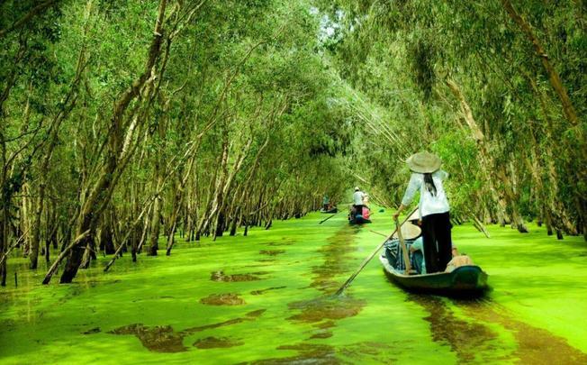 Du lịch bụi miền Tây bằng xe máy với Rừng tràm Trà Sư ở An Giang (ảnh sưu tầm)